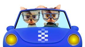 Paar die van puppy in cabriolet zitten Royalty-vrije Stock Foto's