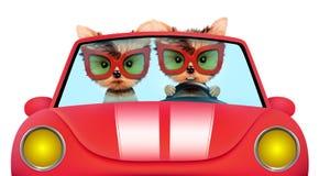 Paar die van puppy in cabriolet zitten Stock Fotografie