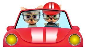 Paar die van puppy in cabriolet zitten Royalty-vrije Stock Afbeeldingen
