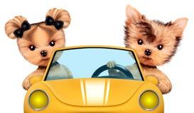 Paar die van puppy in cabriolet zitten Royalty-vrije Stock Foto