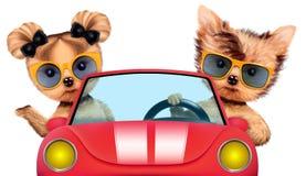 Paar die van puppy in cabriolet zitten Royalty-vrije Stock Fotografie