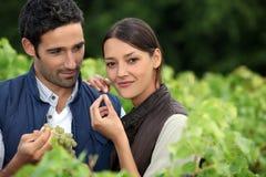 Paar in een wijngaard Stock Afbeelding