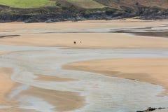 Paar het lopen hond, Crantock-strand, Cornwall royalty-vrije stock fotografie
