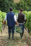 Paar het plukken druiven royalty-vrije stock afbeelding
