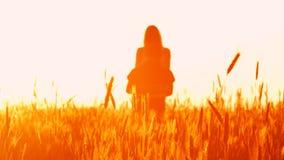 Paar in liefde bij zonsondergang in tarwe stock video