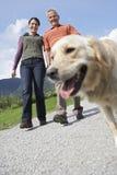 Paar met Golden retriever bij de Landweg stock foto