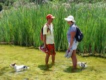 Paar met honden die rivier waden stock afbeeldingen