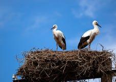 Paar ooievaars in het nest royalty-vrije stock foto's