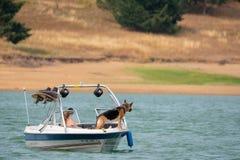 Paar op het meer met de hond stock foto