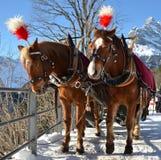 Paar paarden Royalty-vrije Stock Foto's
