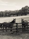 Paar paarden Royalty-vrije Stock Foto