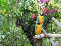 Paar papegaaien (landschap) Royalty-vrije Stock Afbeeldingen