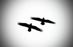 Paar raven royalty-vrije stock fotografie