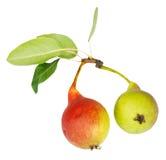 Paar rijpe die perenvruchten op wit wordt geïsoleerd Royalty-vrije Stock Foto's