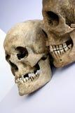 Paar schedels royalty-vrije stock foto's