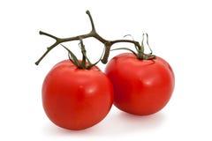 Paar tomaten Royalty-vrije Stock Afbeeldingen