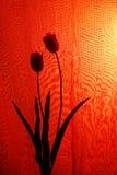 Paar Tulpen over rode achtergrond Royalty-vrije Stock Afbeeldingen