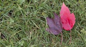 Paar van Autumn Leaves Stock Afbeeldingen