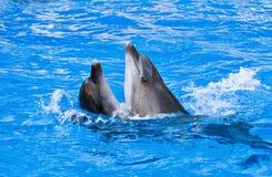Paar van dolfijnen het dansen Royalty-vrije Stock Afbeeldingen
