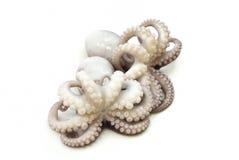 Paar van gekookte octopus Royalty-vrije Stock Foto