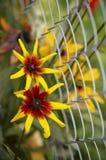 Paar van gele bloemen Stock Foto's