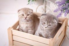 Paar van grappige in de houten doos zitten en en katjes die omhoog eruit zien Royalty-vrije Stock Afbeelding