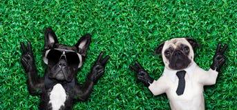 Paar van honden Stock Foto's