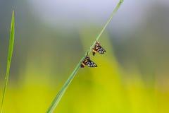 Paar van insect royalty-vrije stock fotografie