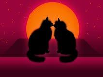 Paar van katten Stock Fotografie