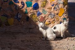 Paar van katten en een mozaïekmuur, Marokko royalty-vrije stock afbeeldingen