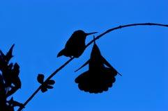 Paar van kolibries stock afbeelding