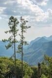 Paar van lange pijnboombomen op hoge berg Royalty-vrije Stock Afbeelding
