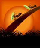 Paar van mieren in de zonsondergang Royalty-vrije Stock Foto
