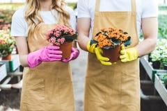 Paar van tuinlieden in handschoenen die potten houden Royalty-vrije Stock Afbeelding