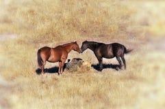 Paar van Twee Paarden Stock Afbeeldingen