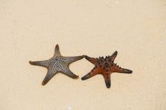 Paar van Zeester op het Strand Stock Foto