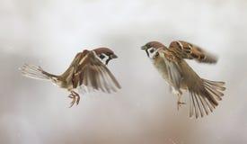 paar vogels die en vleugels het kwade debatteren vliegen golven Stock Fotografie