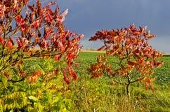 Paarbäume mit roten Blättern. Lizenzfreie Stockbilder