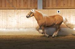Paard 0018 Stock Foto's