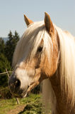 Paard 0023 Stock Foto's