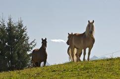 Paard 0025 Royalty-vrije Stock Foto's