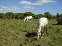 Paard 04 stock afbeelding