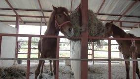 Paard stock footage