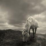 Paard. Royalty-vrije Stock Afbeeldingen