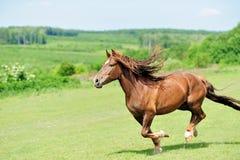 Paard Royalty-vrije Stock Afbeeldingen