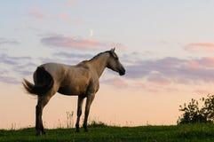 Paard Stock Afbeeldingen