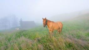 Paard Royalty-vrije Stock Afbeelding