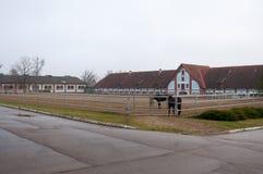 Paard Royalty-vrije Stock Foto