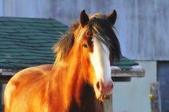Paard Stock Foto's