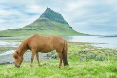 Paard Royalty-vrije Stock Fotografie